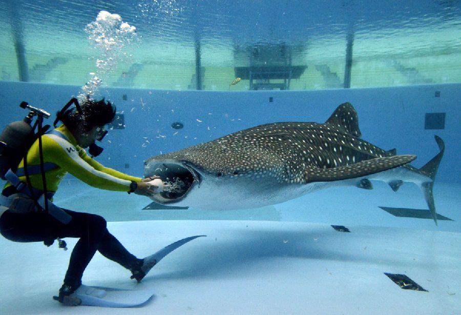 Живой корм для аквариумных рыб