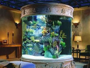 аквариумистика для начинающих.jpg