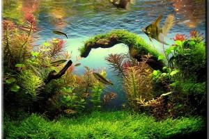 Водоросли в аквариуме: как бороться?