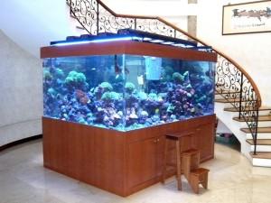 замкнутый аквариум