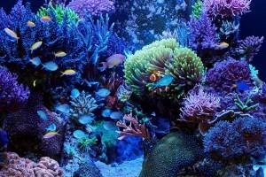 морской аквариум для начинающих