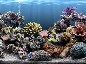 морской аквариум запуск