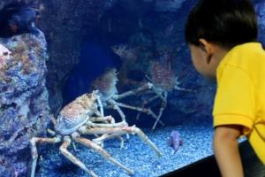 аквариумные крабы описание