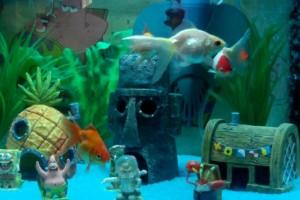 аквариум для рыбок цены