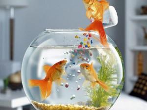 При покупке дома для рыб всегда стоит задумываться, получится ли в нём разместить все эти предметы.
