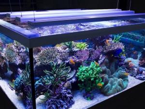 светодиодные лампы для аквариума