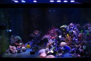 УФ стерилизатор для аквариума