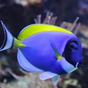 морские аквариумные рыбки