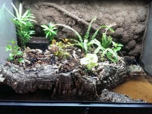 растения для палюдариума