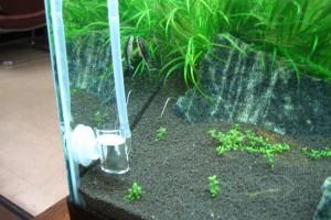 СО2 для аквариума своими руками