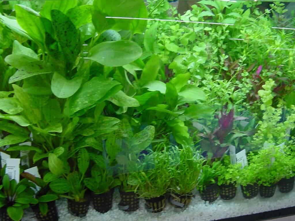 удобрения для аквариумных растений своими руками