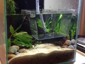 аквариум для креветок
