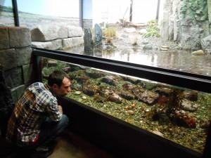 Грунт для аквариума какой лучше