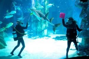 Как чистить аквариум в домашних условиях?