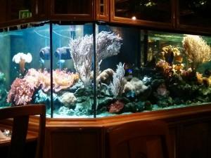 Люминесцентная лампа для аквариума