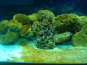 Перекись водорода для аквариума