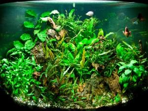 Травник аквариум для растений