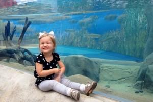 вред от аквариумов