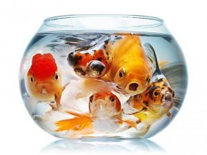 сальмонеллез рыб