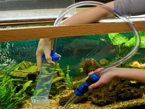 как сифонить грунт в аквариуме
