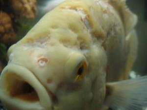 перезапуск аквариума после болезни рыб