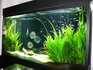 продолжительность жизни аквариума