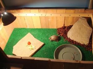 Террариумы для сухопутных черепах