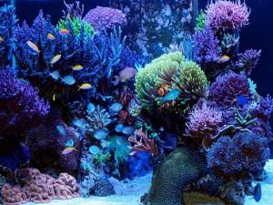 Как сделать морскую воду для аквариума