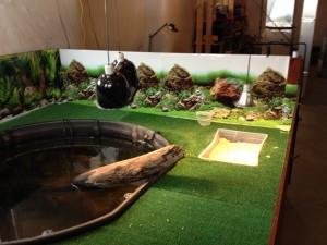 террариум для черепахи