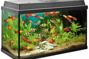 Почему умирают рыбки в аквариуме