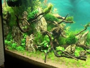 Такаши Амано мир природного аквариума