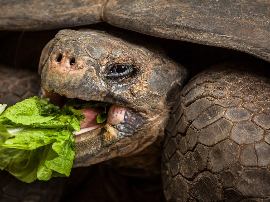Что едят черепахи в домашних условиях?