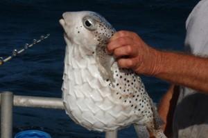 Самая необычная аквариумная рыбка
