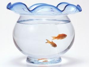 Как перевозить рыбок