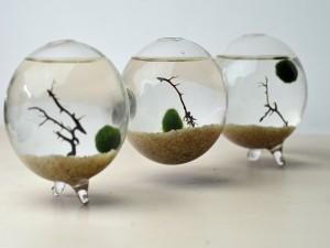 как перевозить аквариумные растения