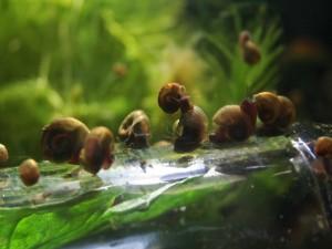 Пленка на воде в аквариуме