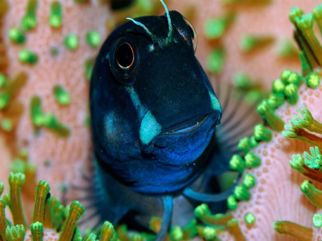 Рыбки для нано аквариума