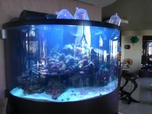 акваплюс аквариумы