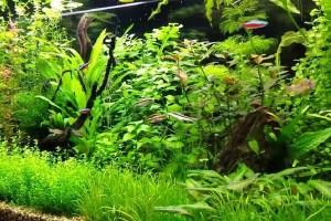 редкие аквариумные растения