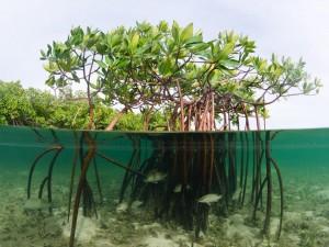 Мангровая коряга для аквариума