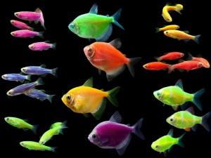 Сколько рыбок держать в аквариуме
