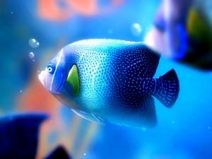 Сколько рыбок можно держать в аквариуме