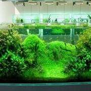 техника безопасности в аквариуме