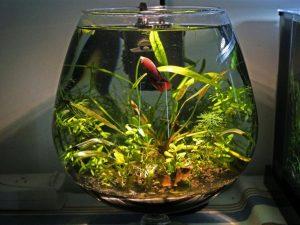 Как спят рыбы в аквариуме