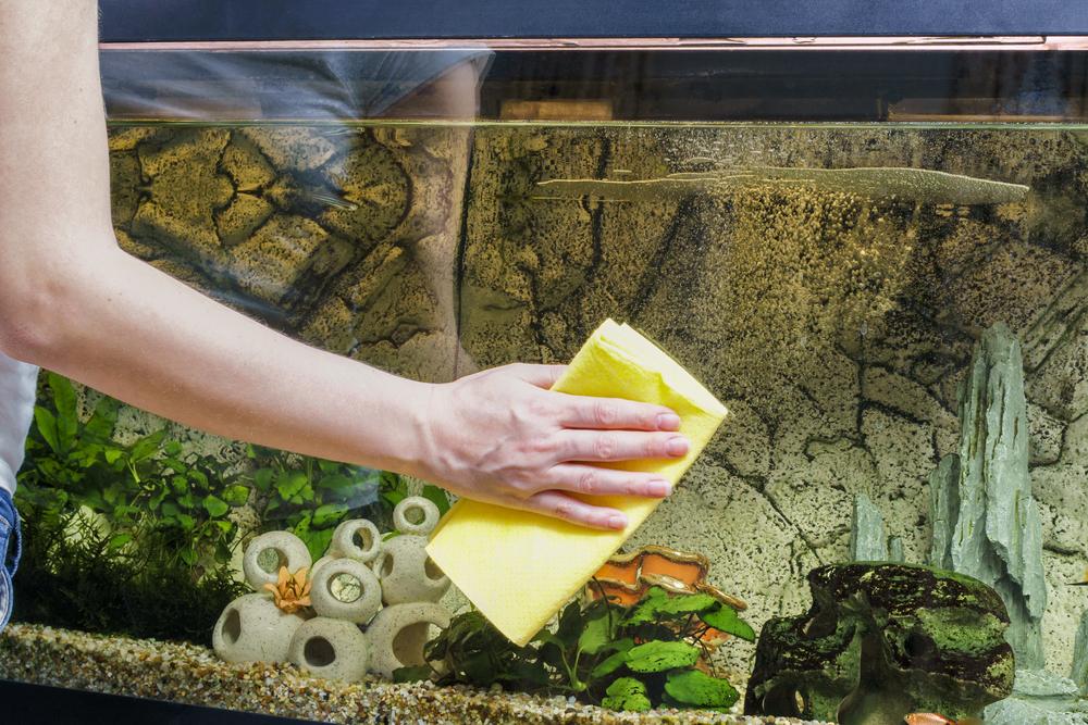 Как ухаживать за аквариумными растениями правильно