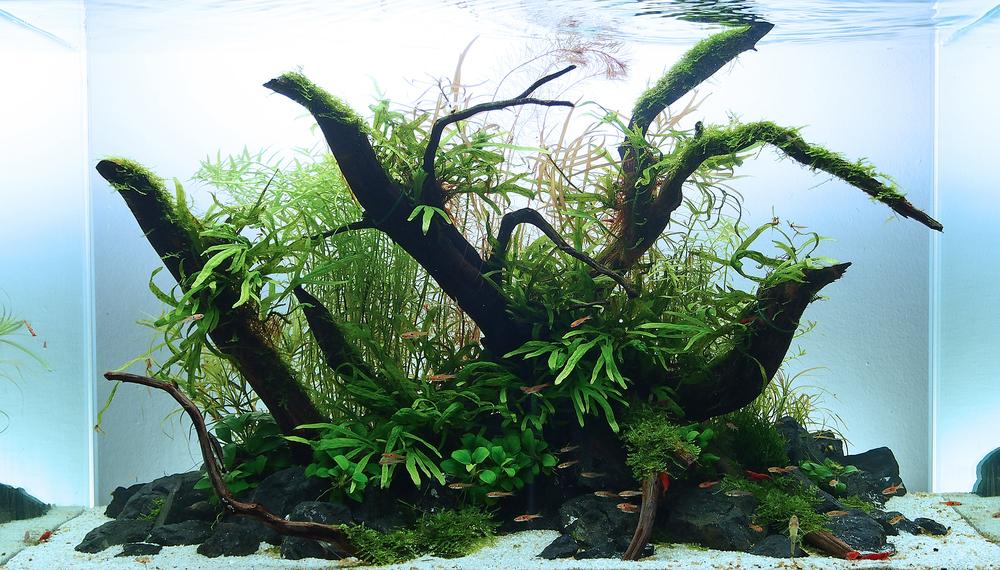 Какие коряги можно использовать в аквариуме