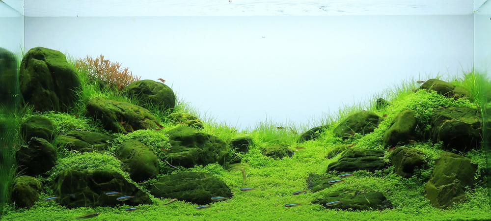 Стили оформление аквариума своими руками: фото, видео