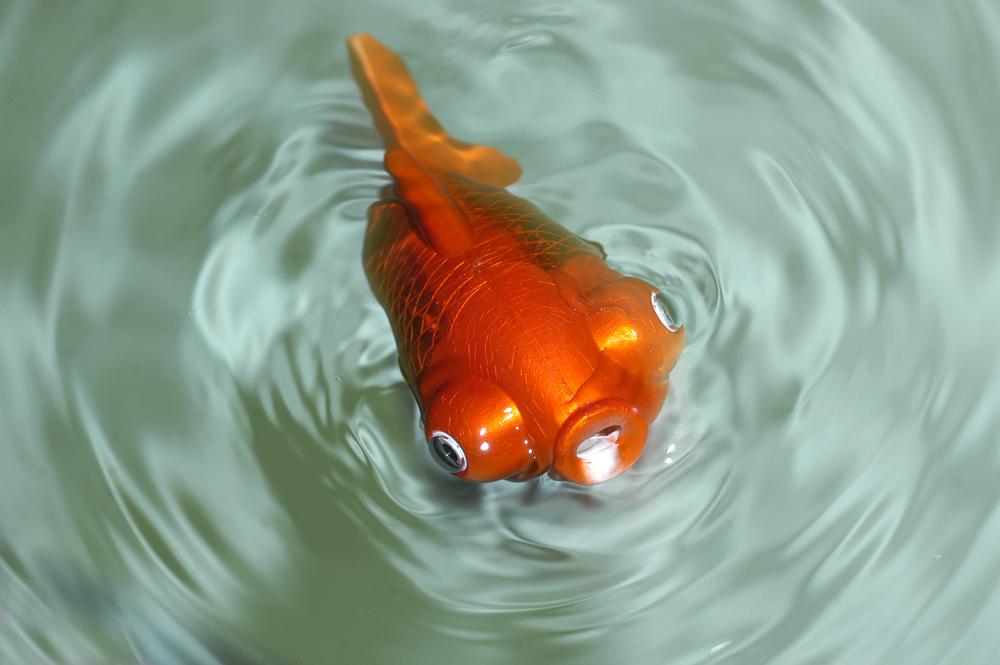 Рыбка-робот: советы по эксплуатации